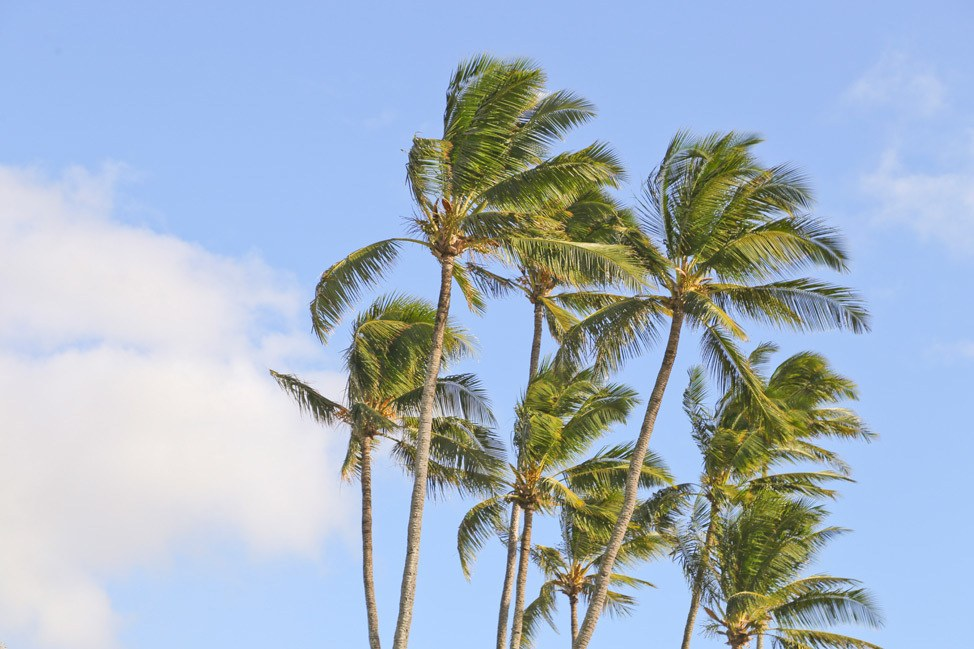 Paia Maui Travel Blog Post