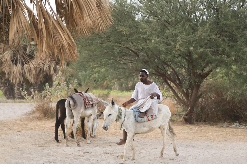 Overnight Felucca Ride in Egypt