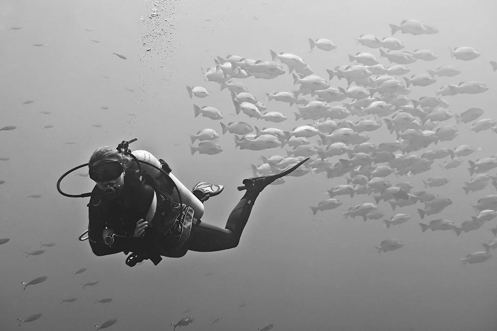 Shark and Yolanda Reef, Egypt