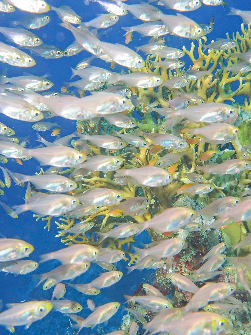 Top Scuba Diving Liveaboard Tips