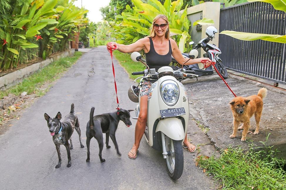 Dogs on a motorbike in Bali