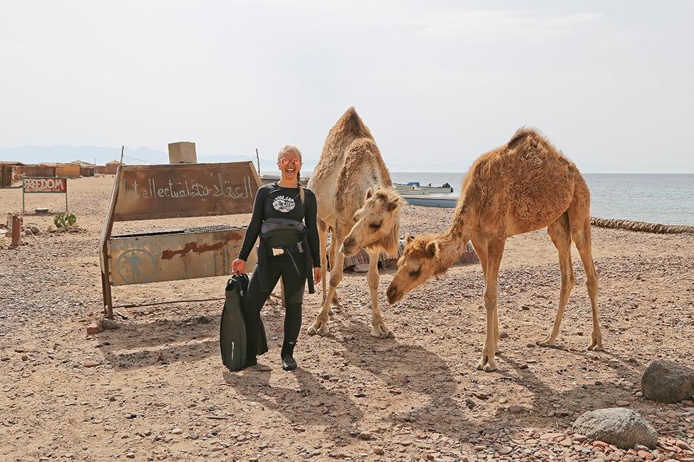 Camel Diving in Ras Abu Galum, Sinai, Egypt