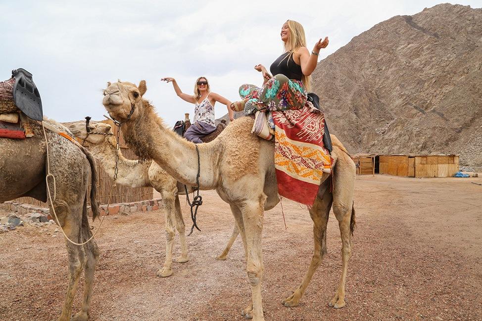 Camel Ride to Ras Abu Galum