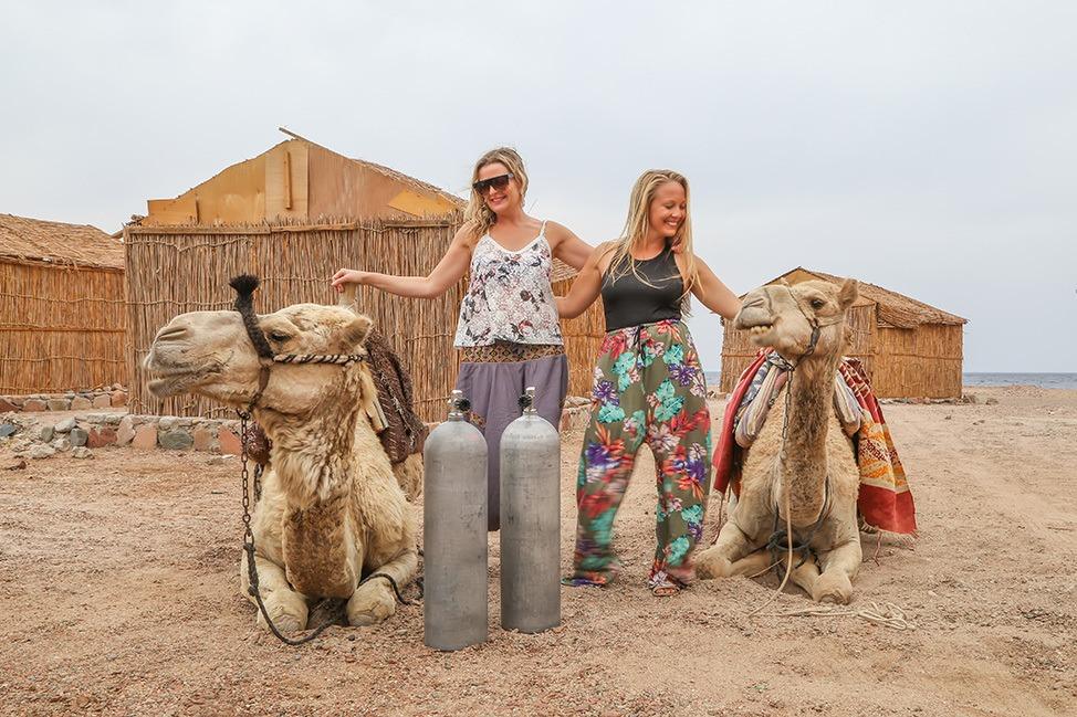 Camel Diving Trip to Ras Abu Galum