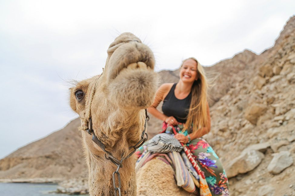 Camel Riding in Ras Abu Galum, Sinai, Egypt