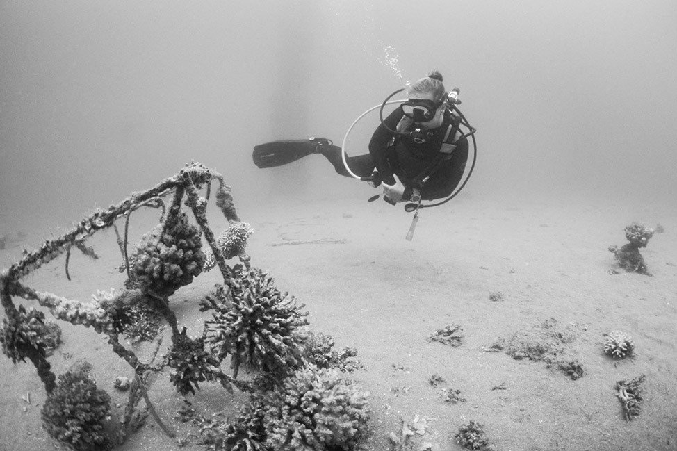 Diver in Red Sea, Eilat, Israel