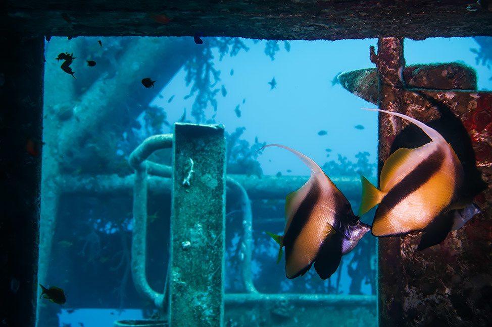 Scuba Diving the Wreck of Satil in Eilat, Israel