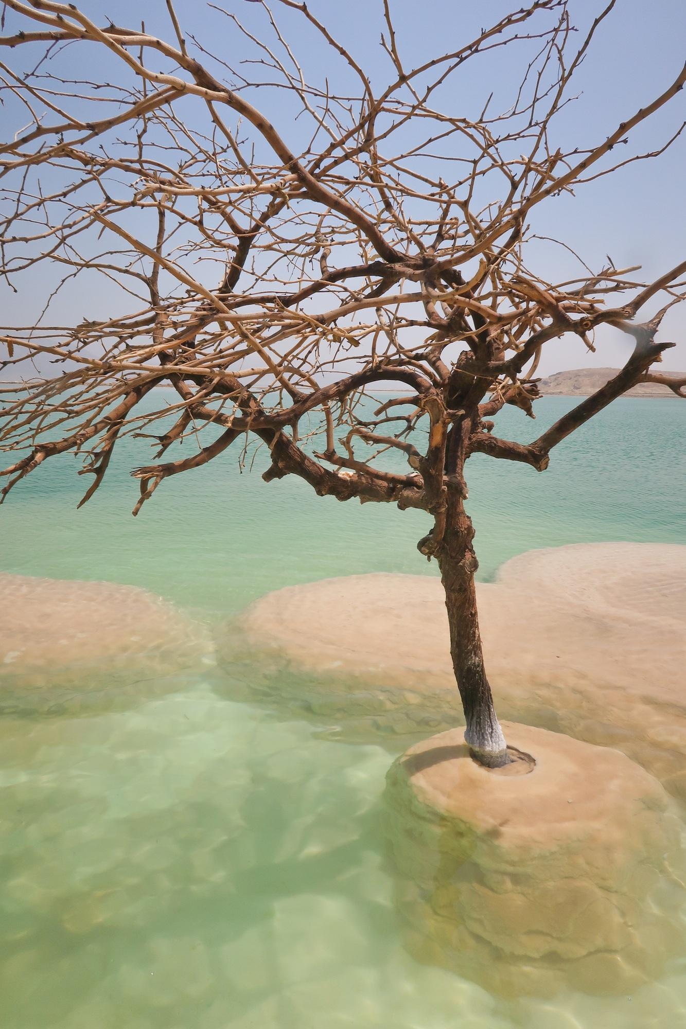The Dead Sea Tree in Israel