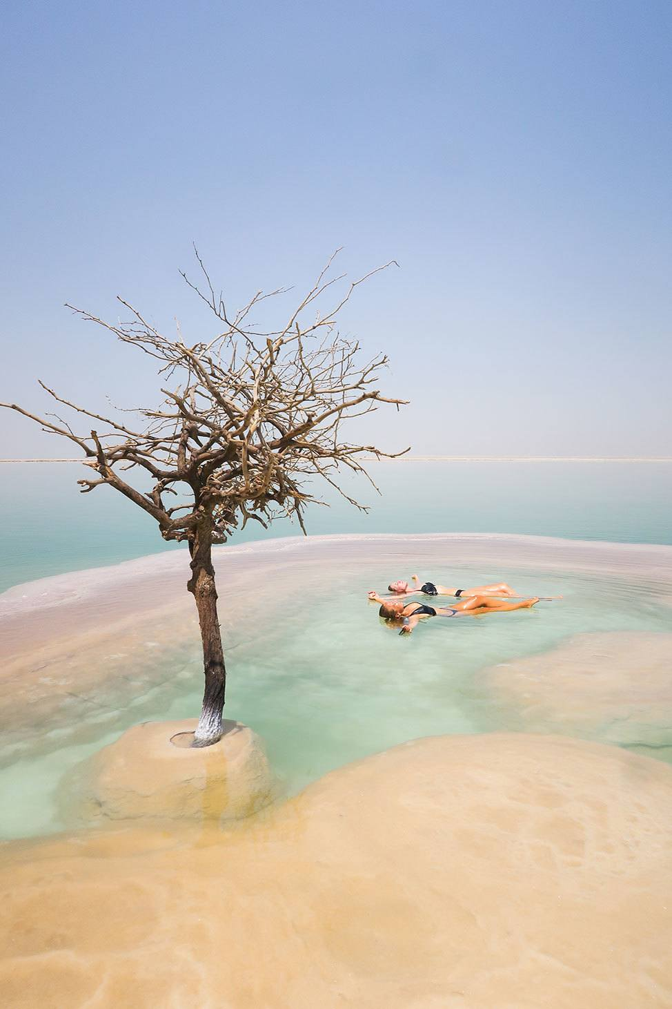 Dead Sea Tree, Israel