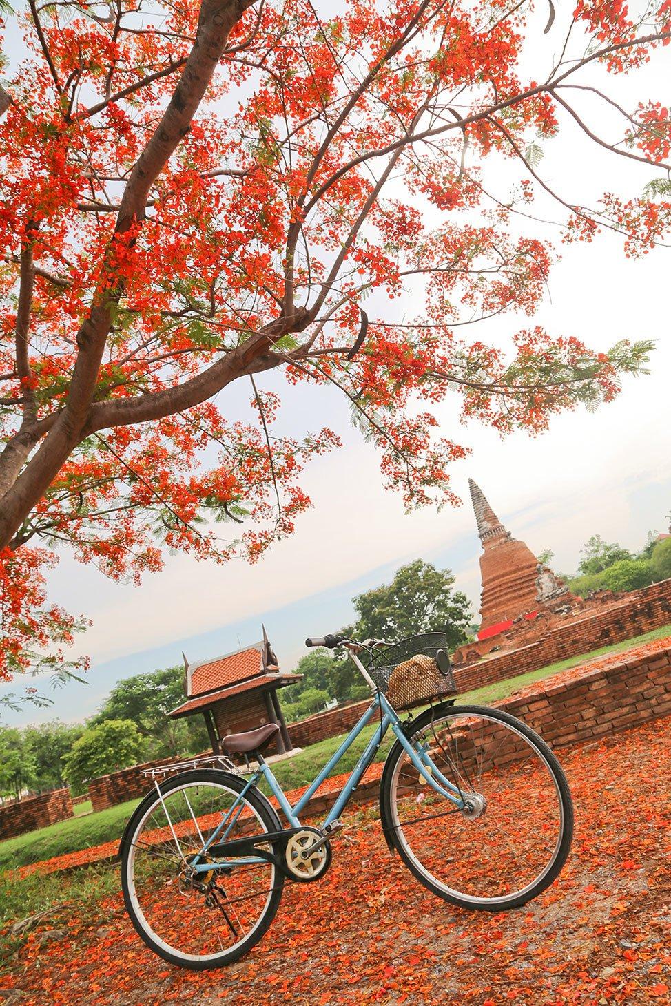 Getting Around Ayutthaya