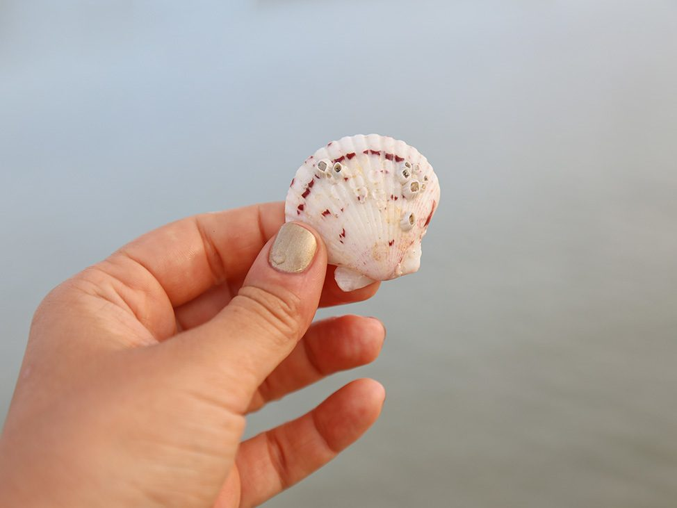 Seashell in Florida
