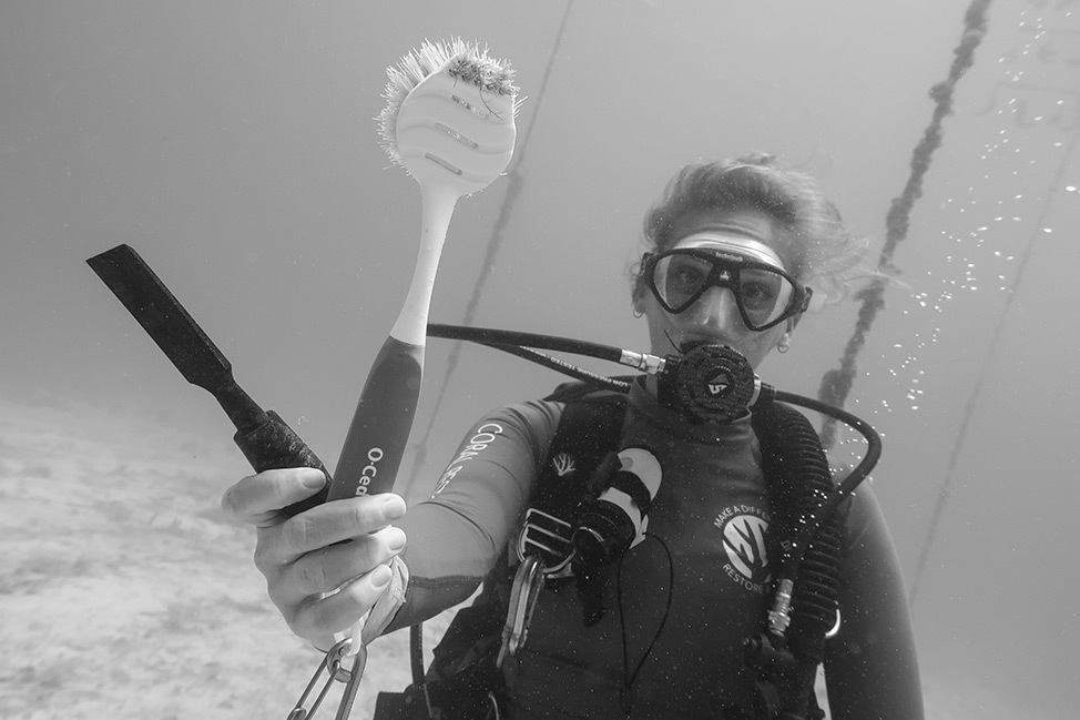 Planting Coral with The CRF Coral Research Foundation in Key Largo, Florida