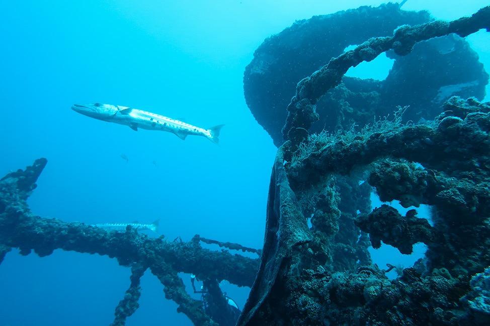 Captain's Corner Key West Diving