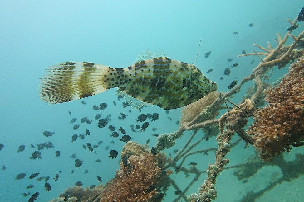Diving at Junkyard Dive Site, Koh Tao, Thailand