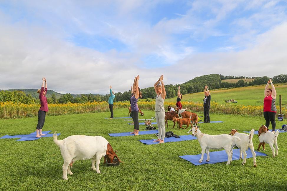 Goat Yoga at the ZiegenVine Homestead