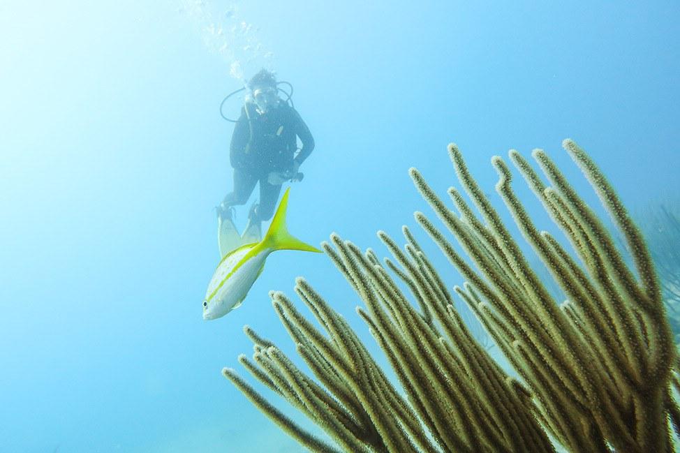 Scuba Diving in Sosua with Dive Cabarete, Dominican Republic