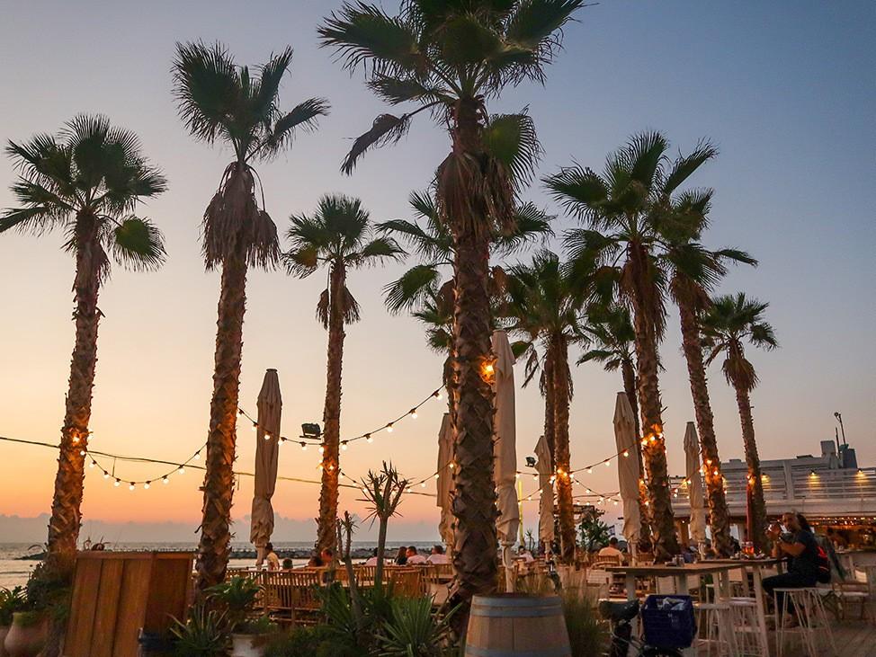 Sunset among palm trees in Tel Aviv, Israel
