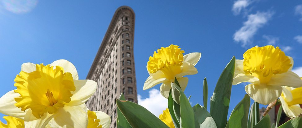 Brooklyn in Bloom: A Trip to NYC in April thumbnail