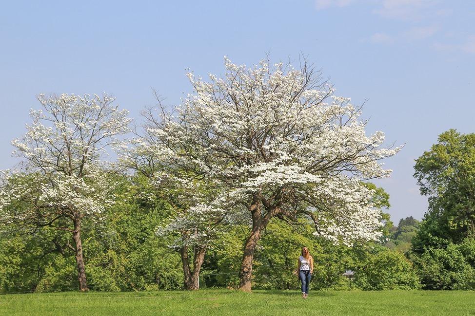 Spring in Albany, New York