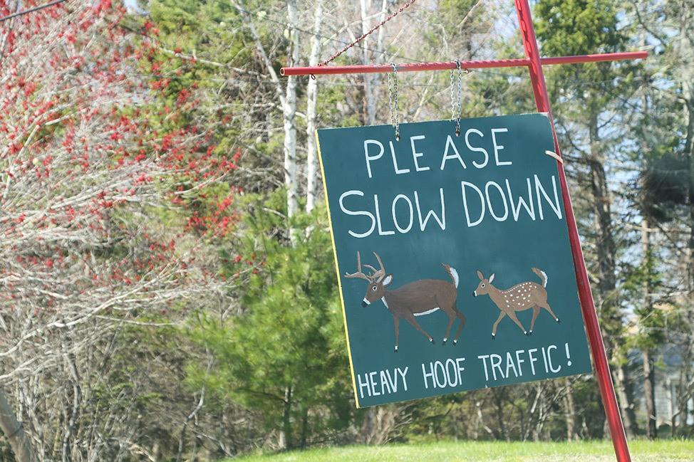 Deer Crossing Sign in Acadia National Park, Maine