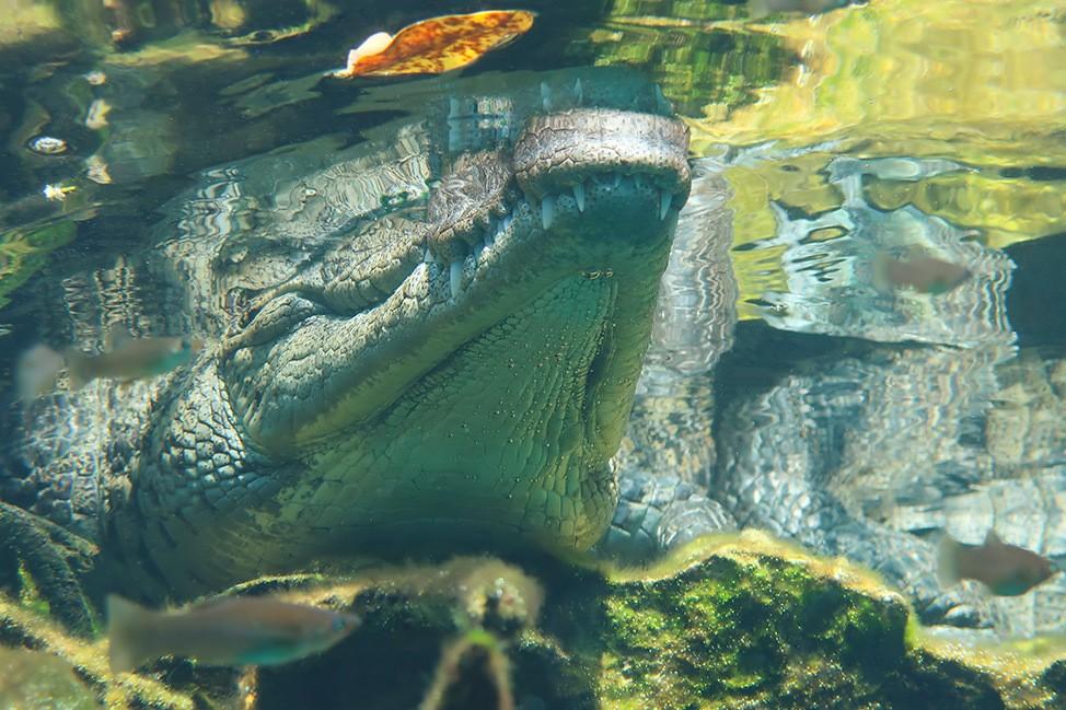 Casa Cenote, Scuba Diving in Tulum