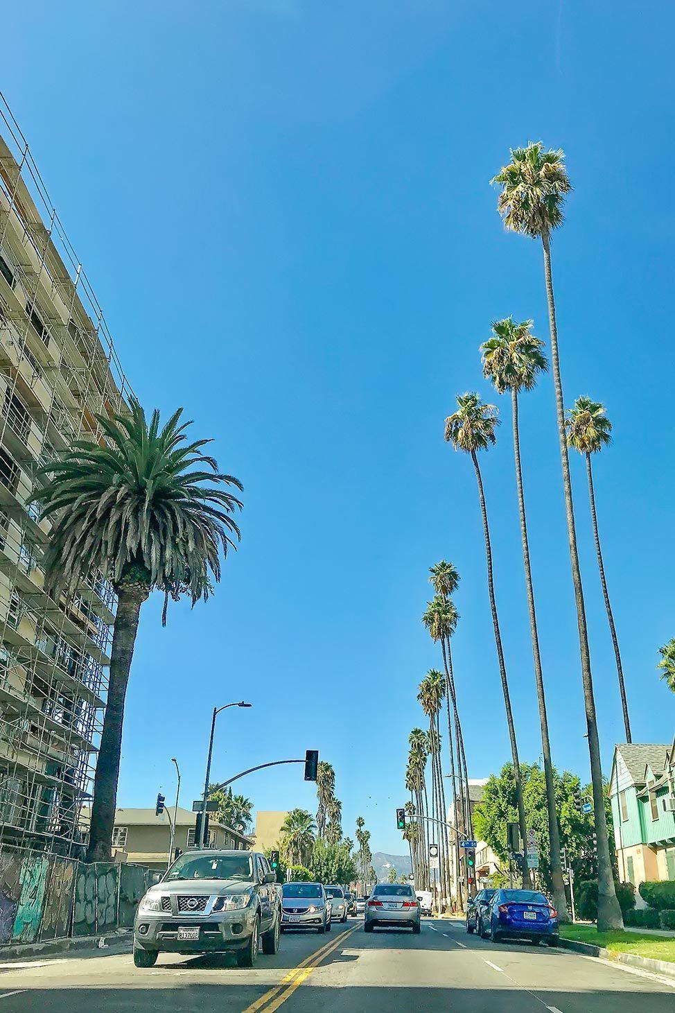Los Angles Palm Trees