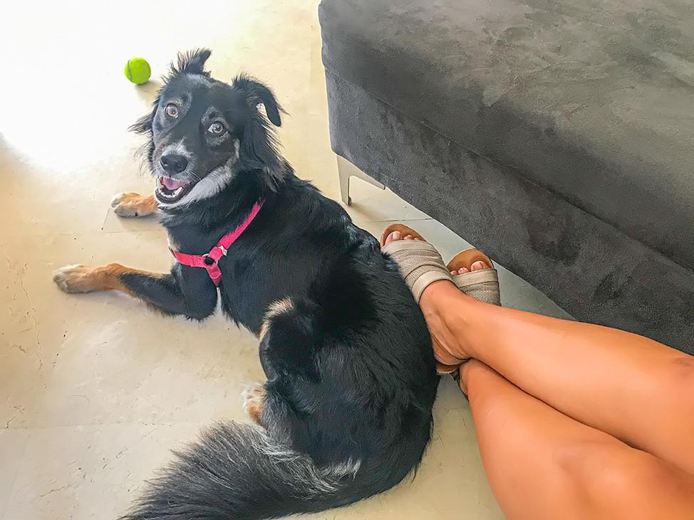 Cute Dog Tel Aviv