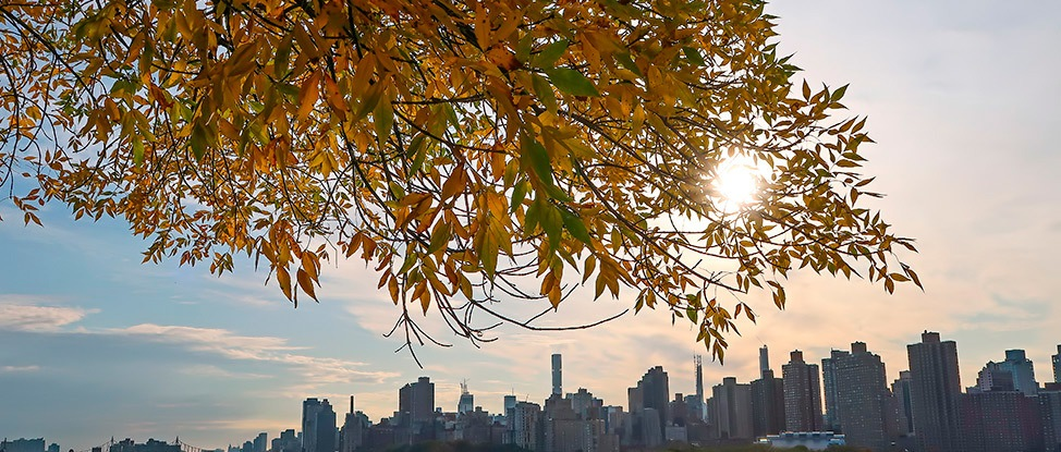 Embracing Autumn in the Empire State thumbnail