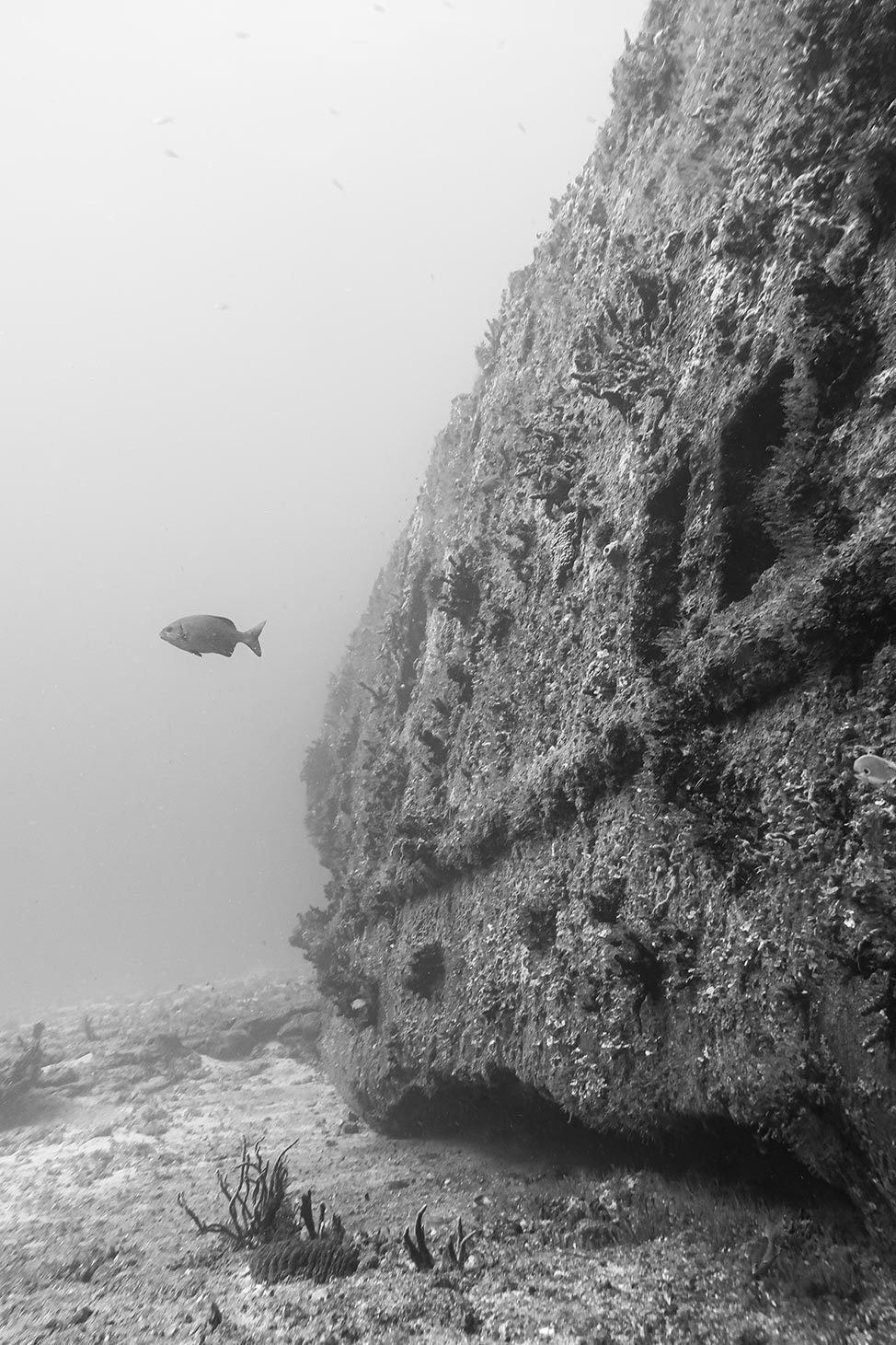 Diving the Gunboat C-58 Shipwreck in Isla Mujeres, Mexico