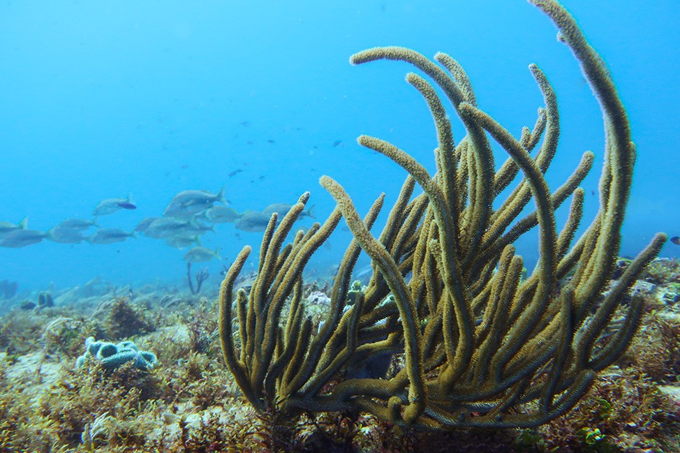 Scuba Diving at Manchones Natural Reef, Isla Mujeres, Mexico