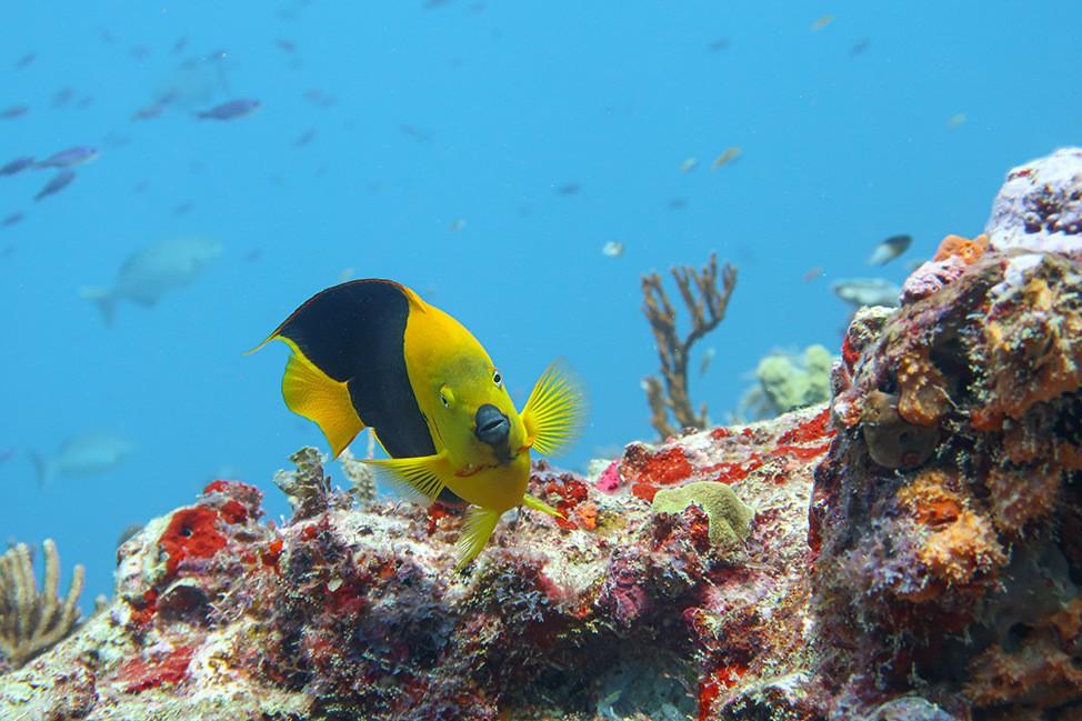 Scuba Diving in Isla Mujeres