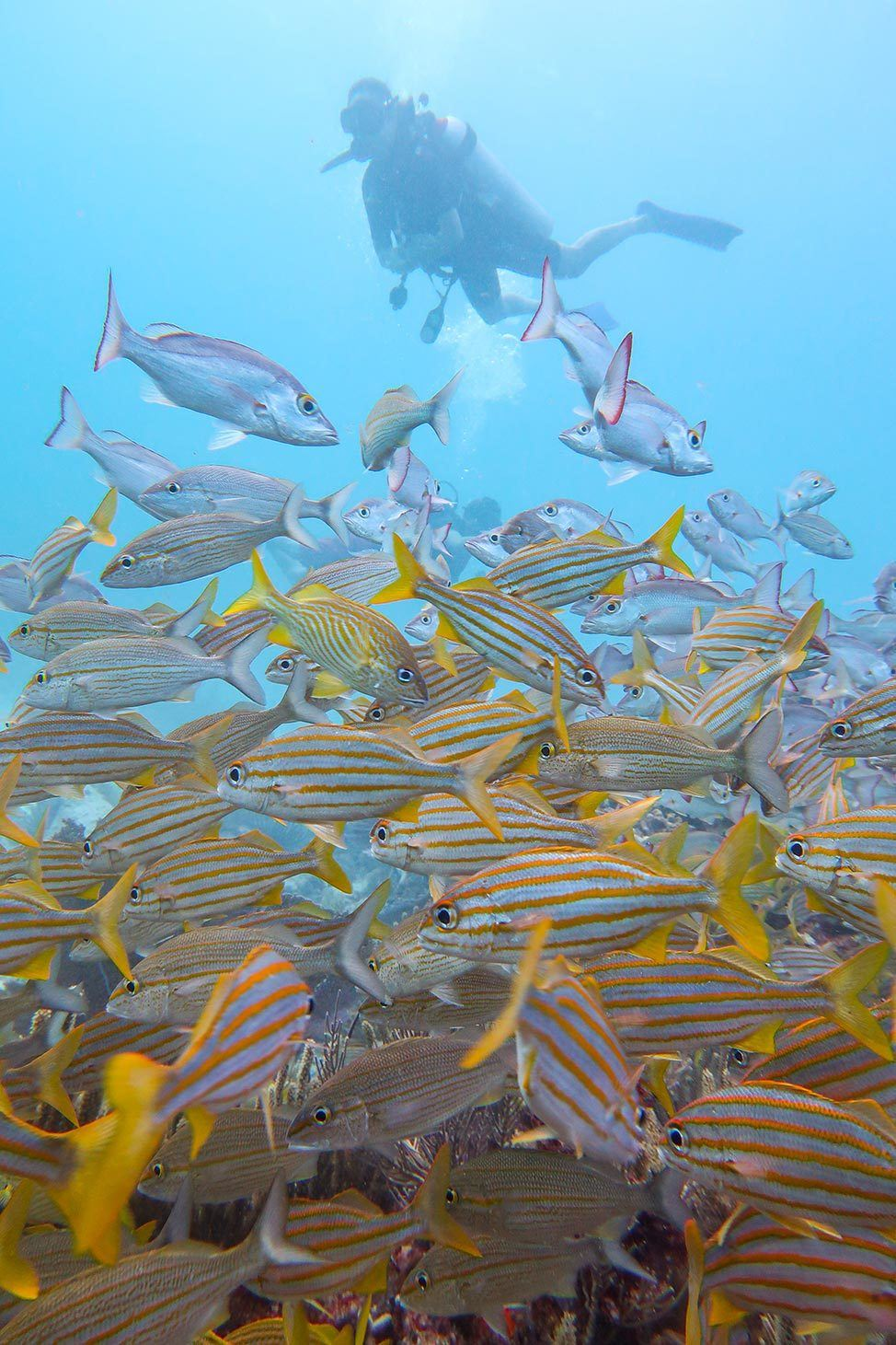 Scuba Diving at Manchones Natural Reef in Isla Mujeres, Mexico