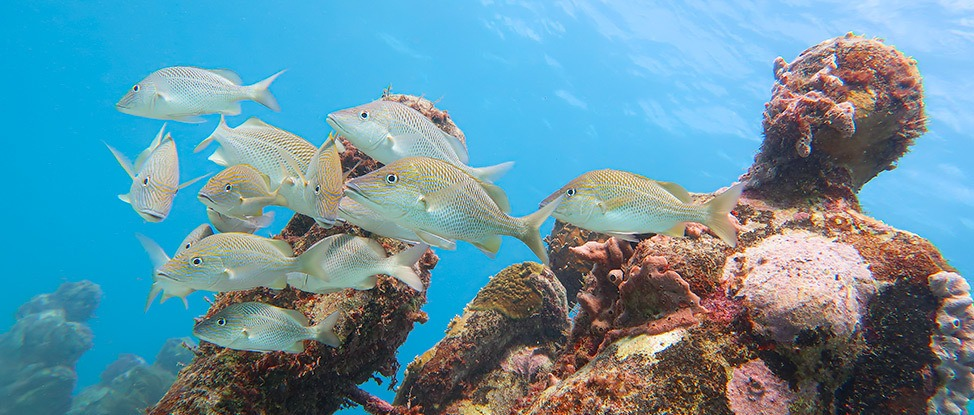 Apres Sea: Scuba Diving in Isla Mujeres thumbnail
