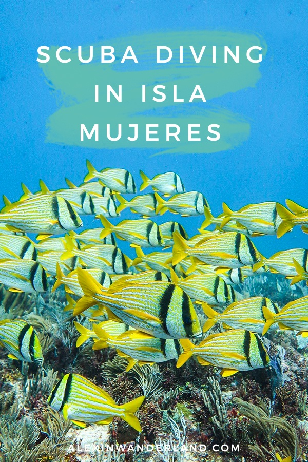 What to expect scuba diving in Isla Mujeres, Mexico!