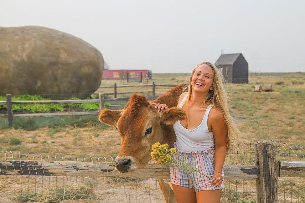 Idaho Potato Hotel Cow