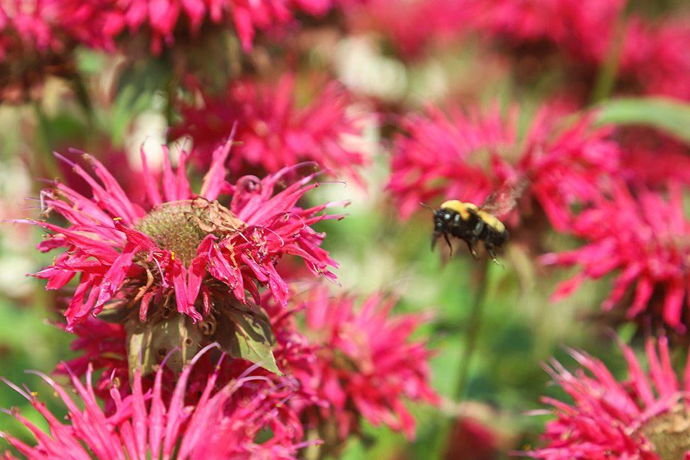 Sawtooth Botanical Garden, Sun Valley, Idaho