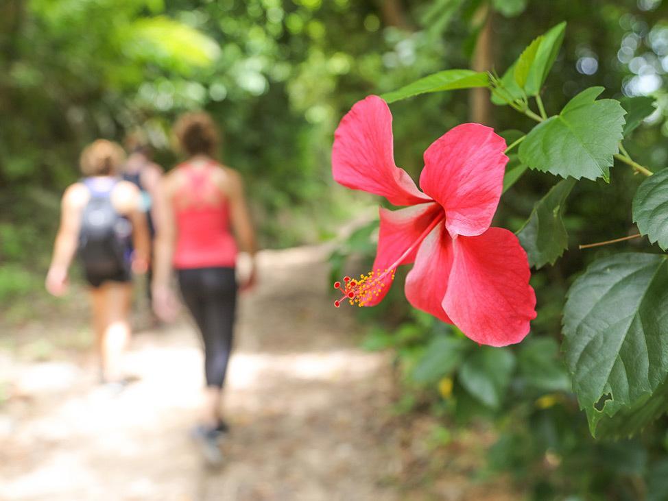 Wander Women Virtual Retreat hiking in the tropics