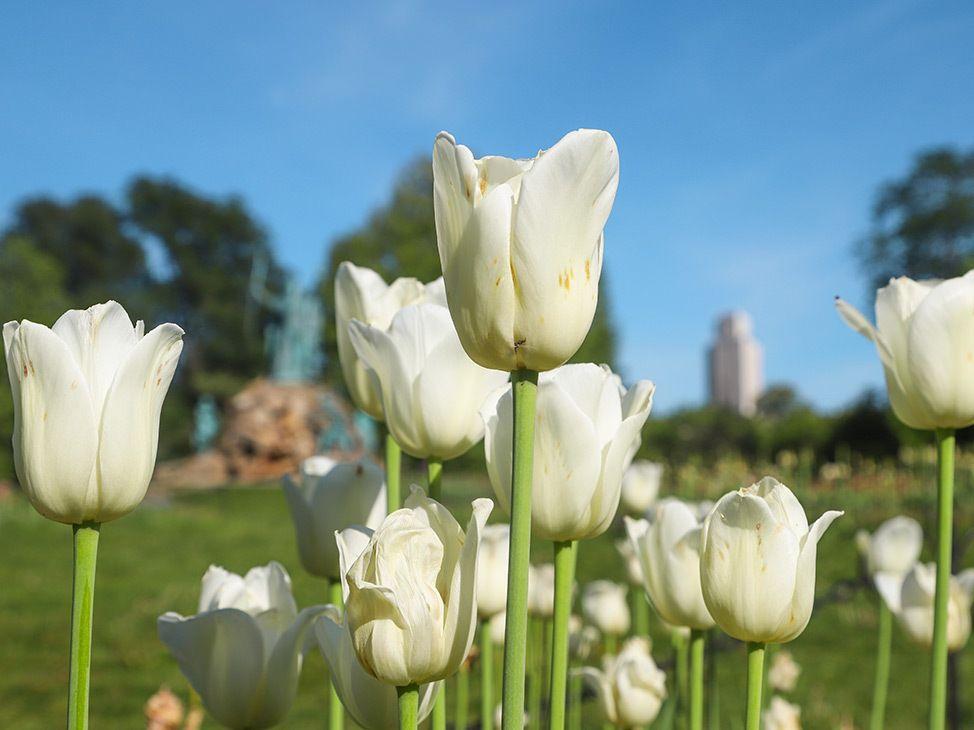 Wander Women Virtual Retreat spring tulip flowers