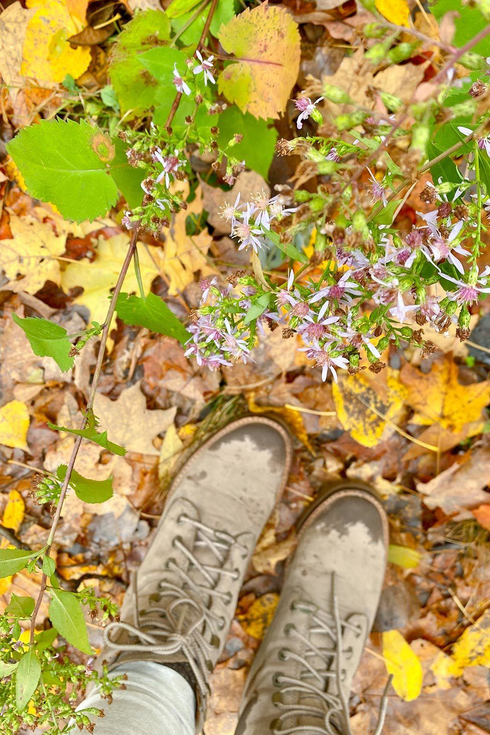 Hiking the Finger Lakes Trail