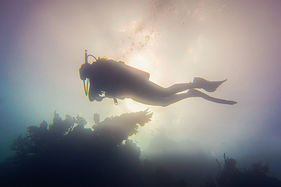 Scuba diving at Cayo Arenal, Dominican Republic