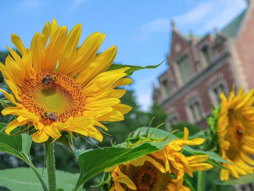 Wander Women Travel Workshop 2021 sunflowers