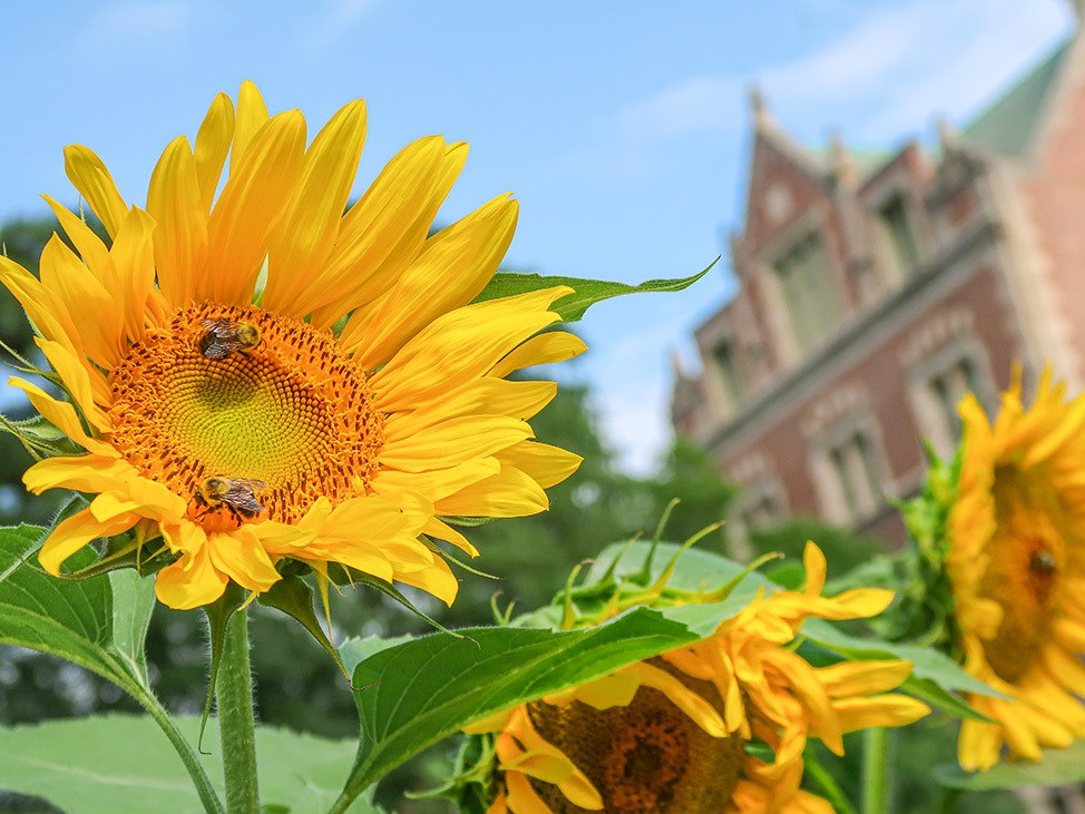 Wander Women Hudson Valley: summer sunflowers in New York State