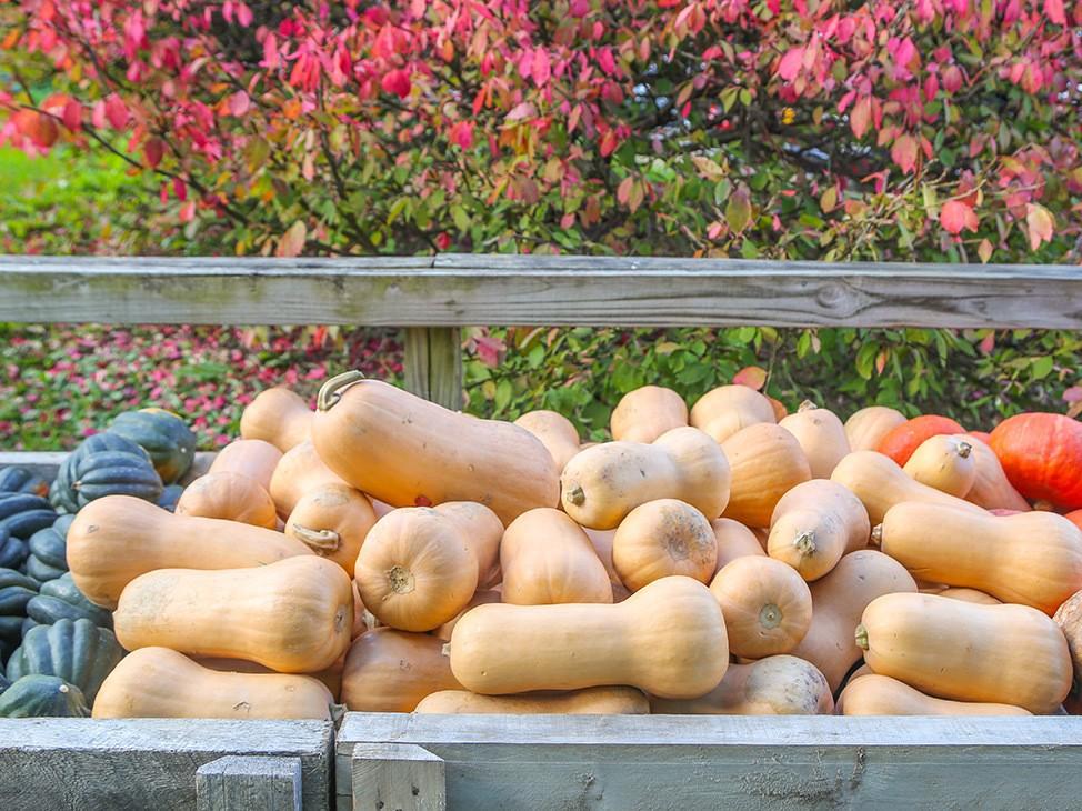 Wander Women Hudson Valley: various fall squash display at farm in upstate New York