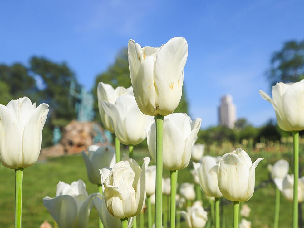Wander Women Hudson Valley: tulips in New York State