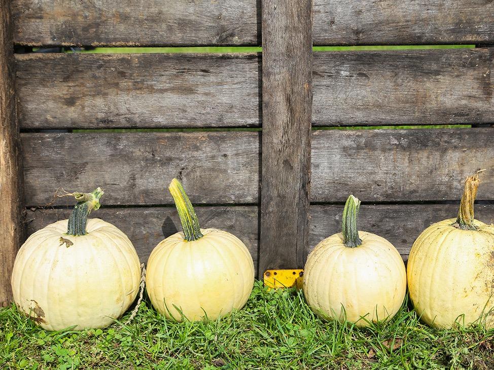 Wander Women Hudson Valley: cute pumpkins fall decor outside