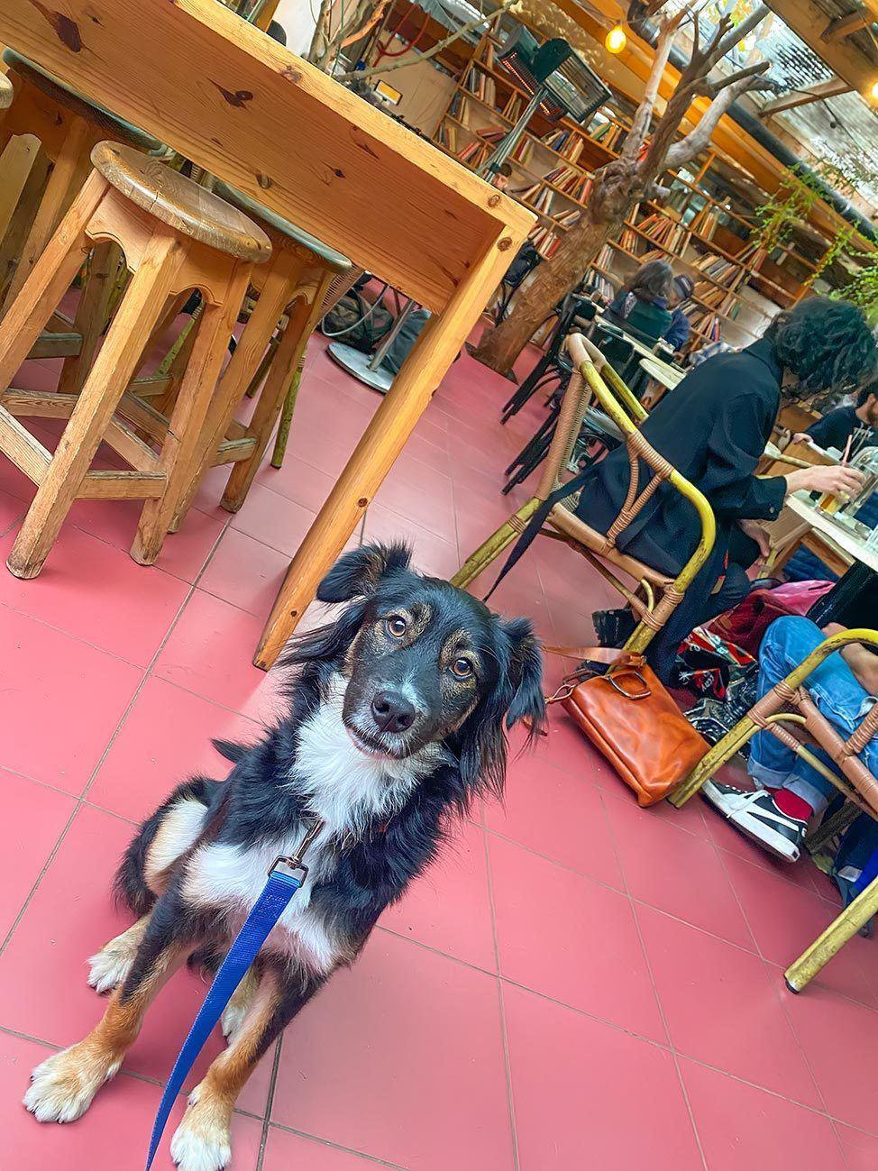 Dog in Tel Aviv