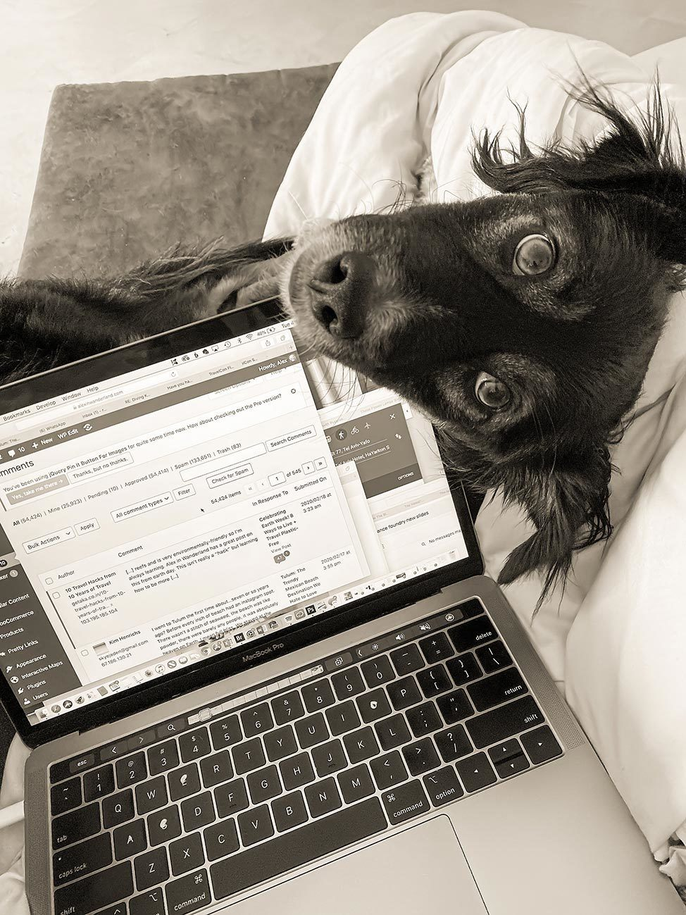 Work from home with a dog
