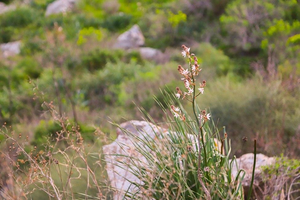 Gamla Nature Reserve Israel