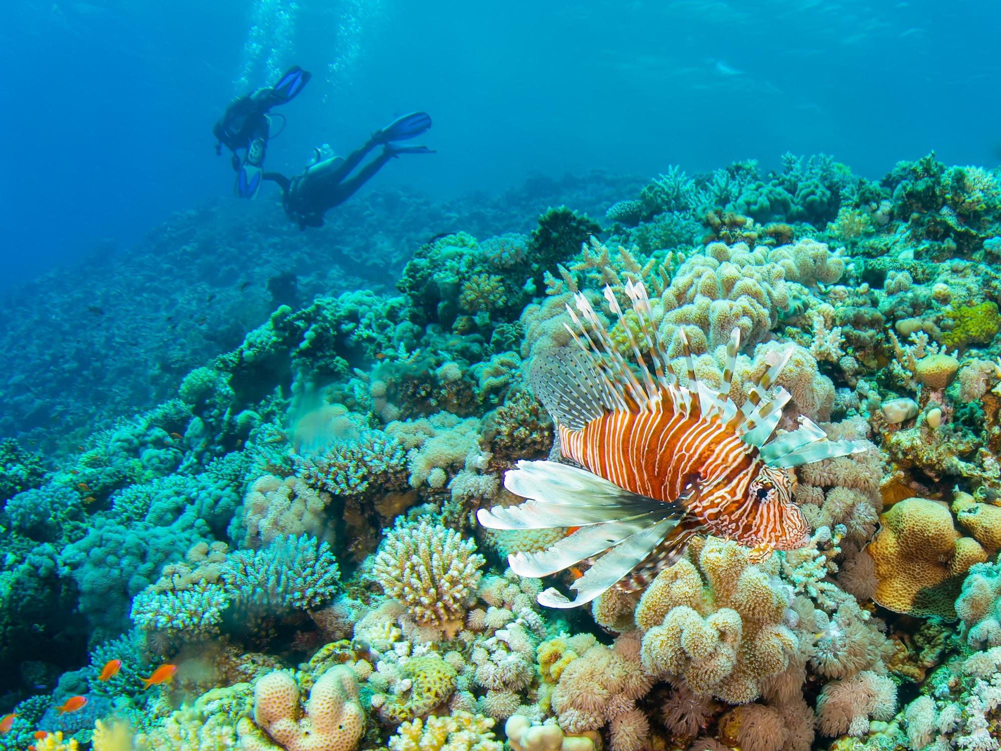 Women's scuba trip to the Maldives